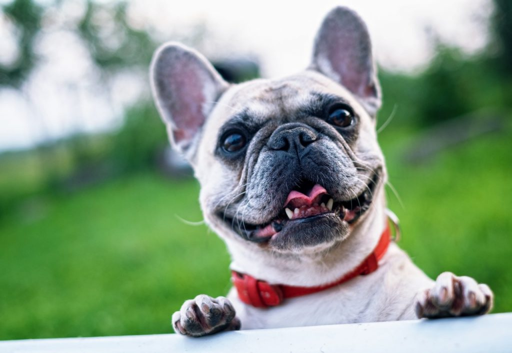 treating scabies in pets